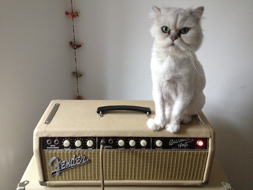 Cats 1 (via Cats on Amps Tumblr)