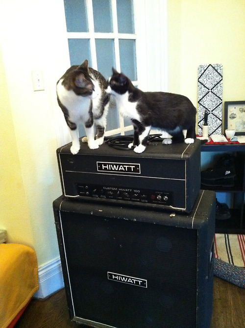 Cats 2 (via Cats on Amps Tumblr)
