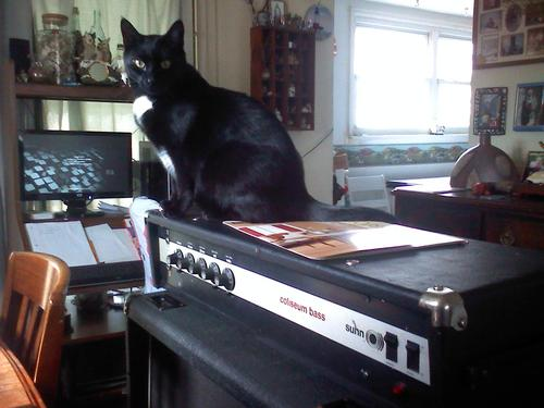 Cats 3 (via Cats on Amps Tumblr)